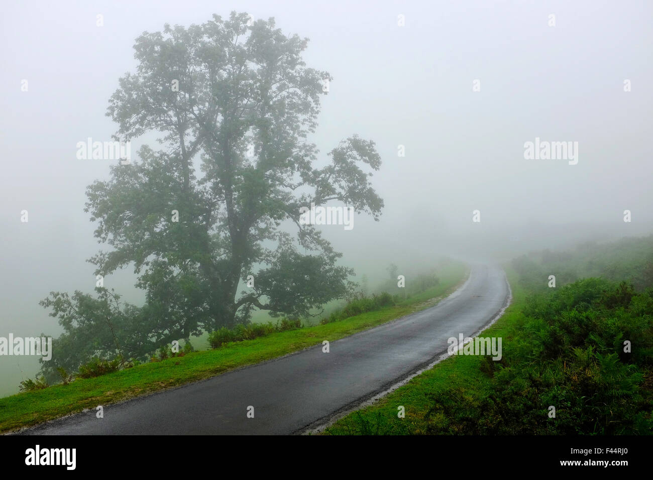 Mist on the Napoleon Route to Roncesvalles, Way of Saint James (Camino de Santiago), France. - Stock Image