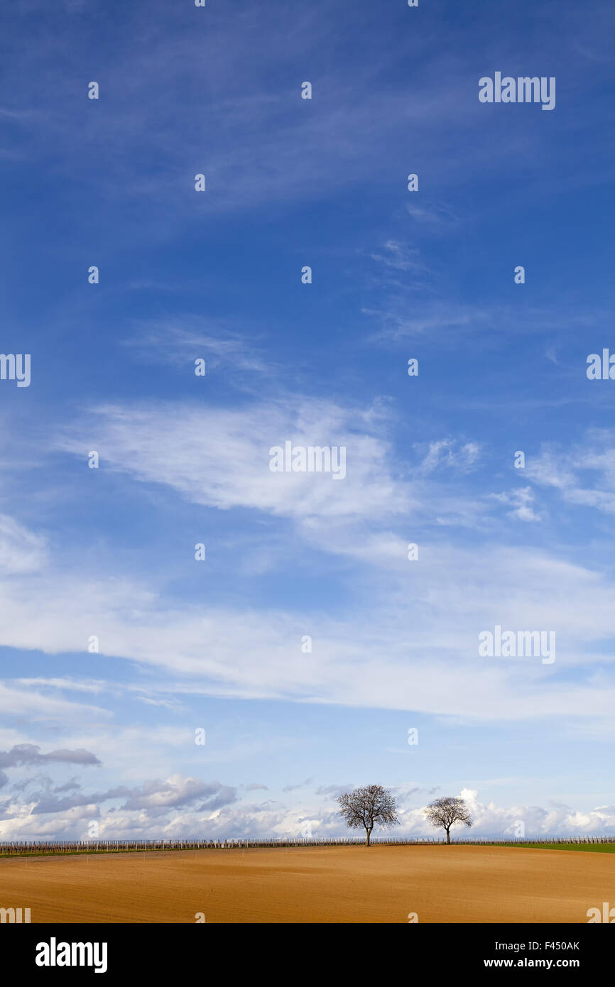 Walnut trees in front of clouded sky - Stock Image