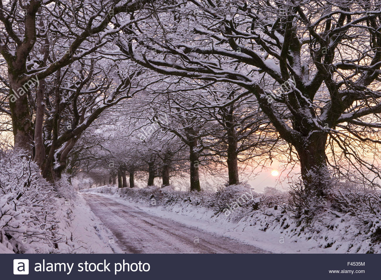 Tree lined country lane laden with snow, Exmoor National Park, Somerset, England. January 2012. - Stock Image