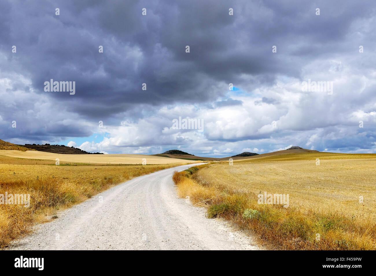 Harvested wheat fields on the Way of Saint James (Camino de Santiago) on the Carretera Boadilla del Camino - Itero - Stock Image