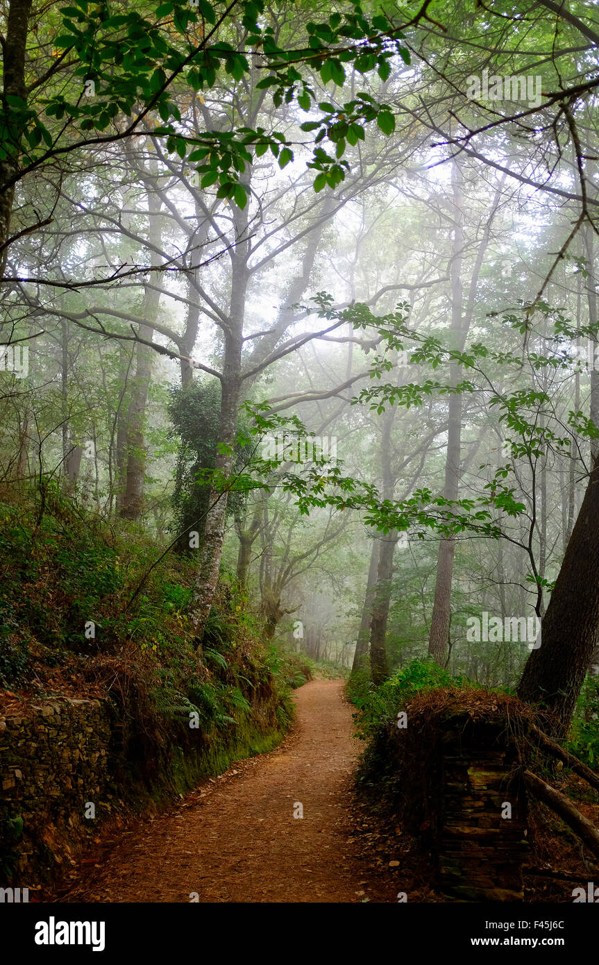 The woods outside of Portomarin on the Way of Saint James (Camino de Santiago), Galicia, Spain - Stock Image