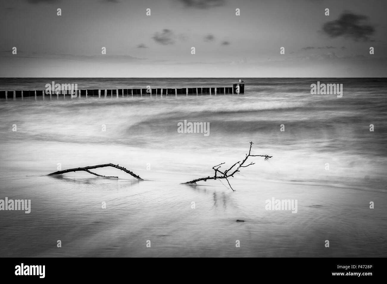 Groynes on shore of the Baltic Sea - Stock Image