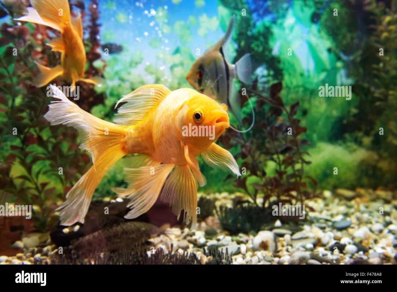 Colorful fishes in aquarium Stock Photo: 88670688 - Alamy