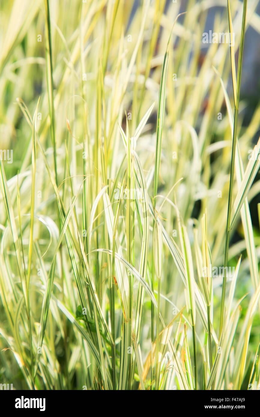 autumn dry grass. outdoor shot - Stock Image