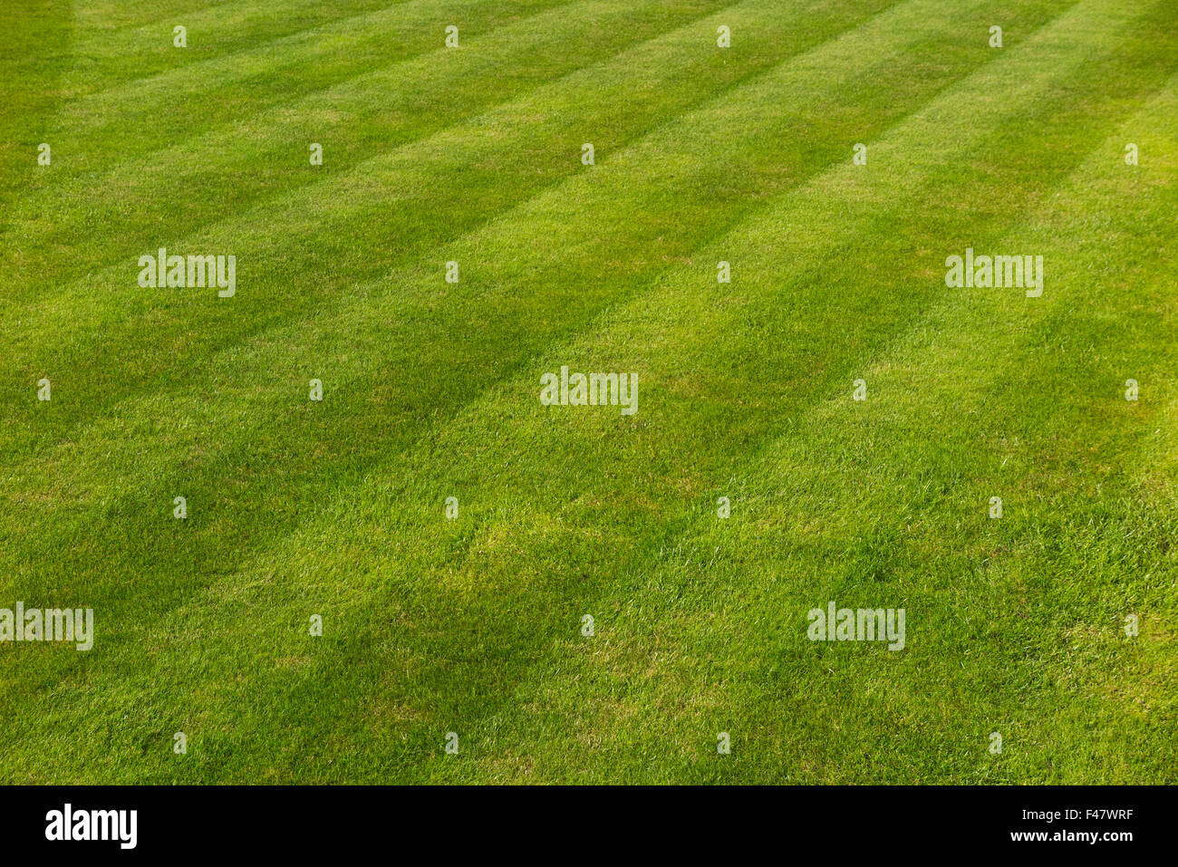 Lawn Stripes & striped autumnal grass on a well defined lawn / early autumn The lawn is not quite perfect but - Stock Image