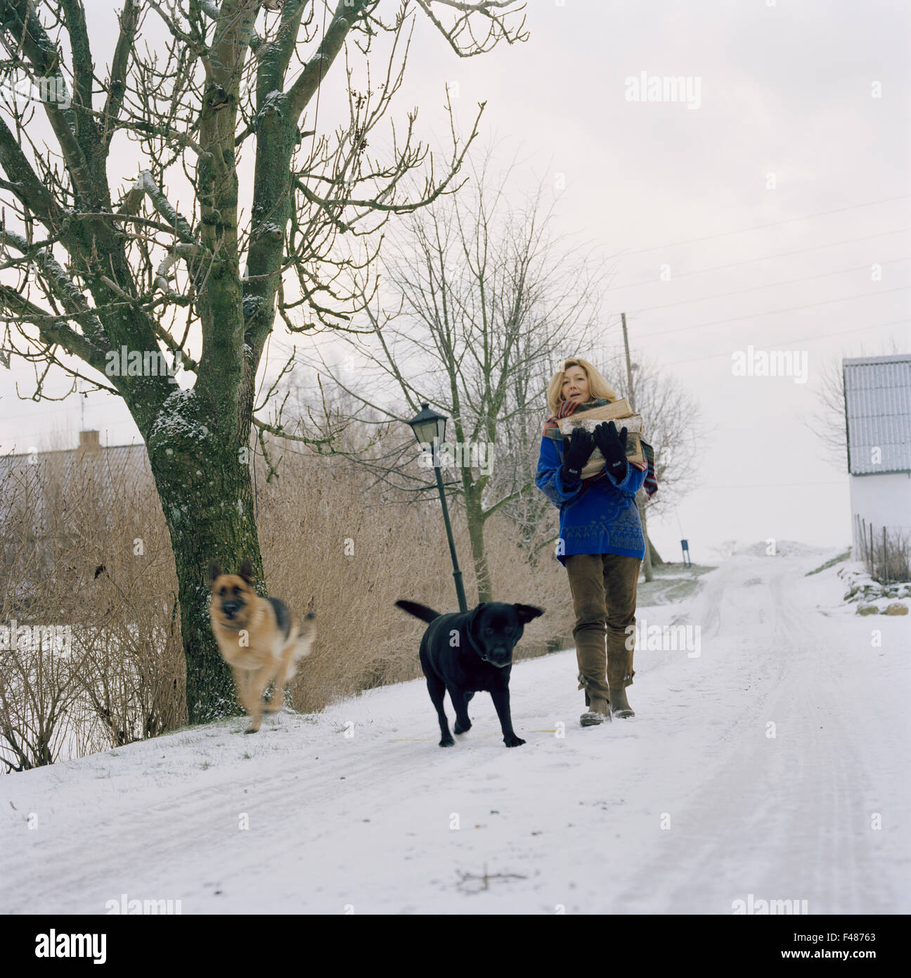 Scandinavian woman with dogs in the snow, Sweden. Stock Photo