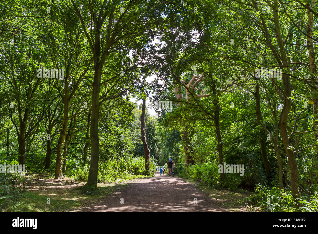 Family walking on a trail in Sherwood Forest Country Park, near Edwinstowe Nottinghamshire, England, UK - Stock Image