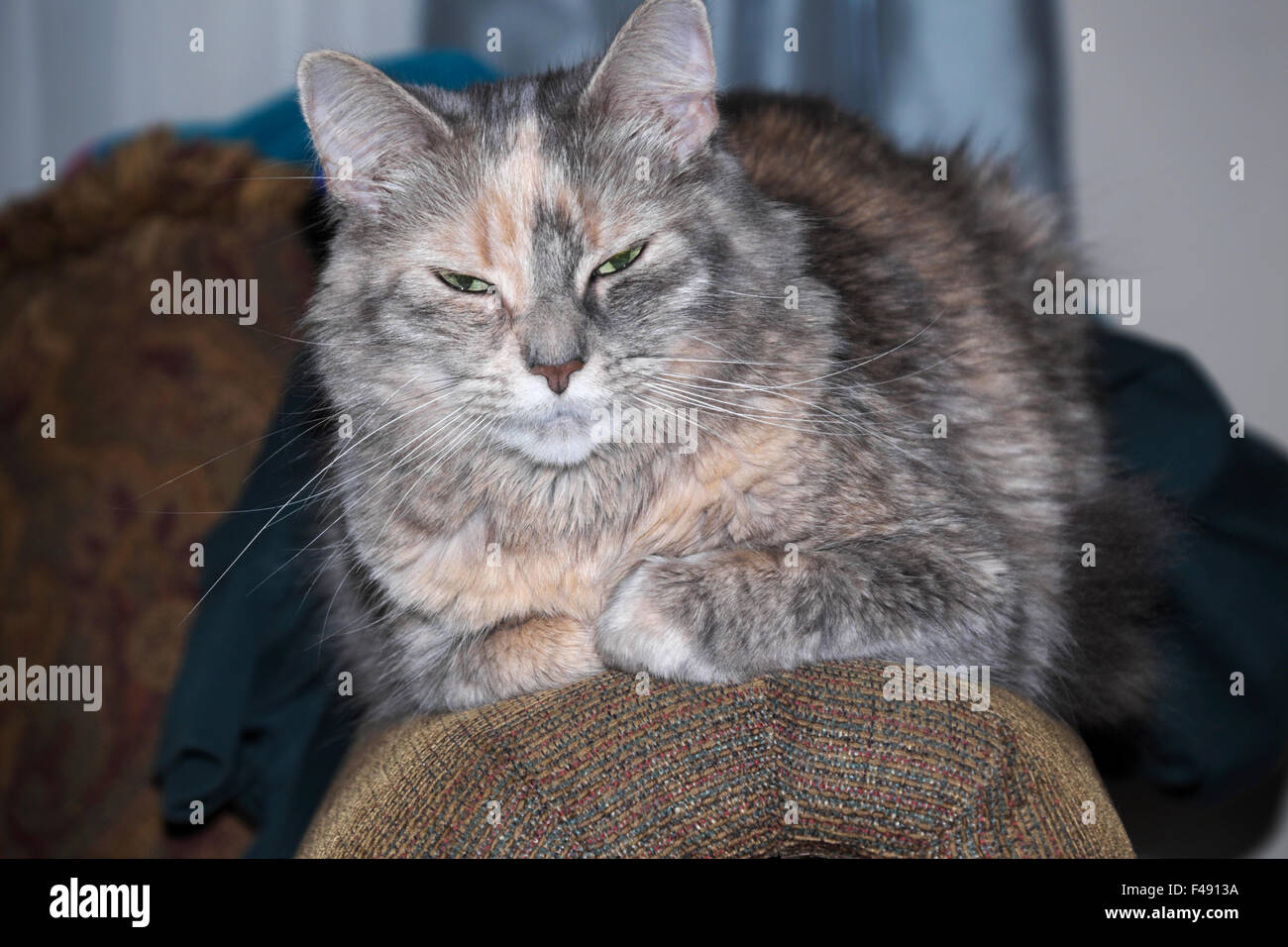 """A child's pet cat, called """"Crabby Cat."""" Stock Photo"""