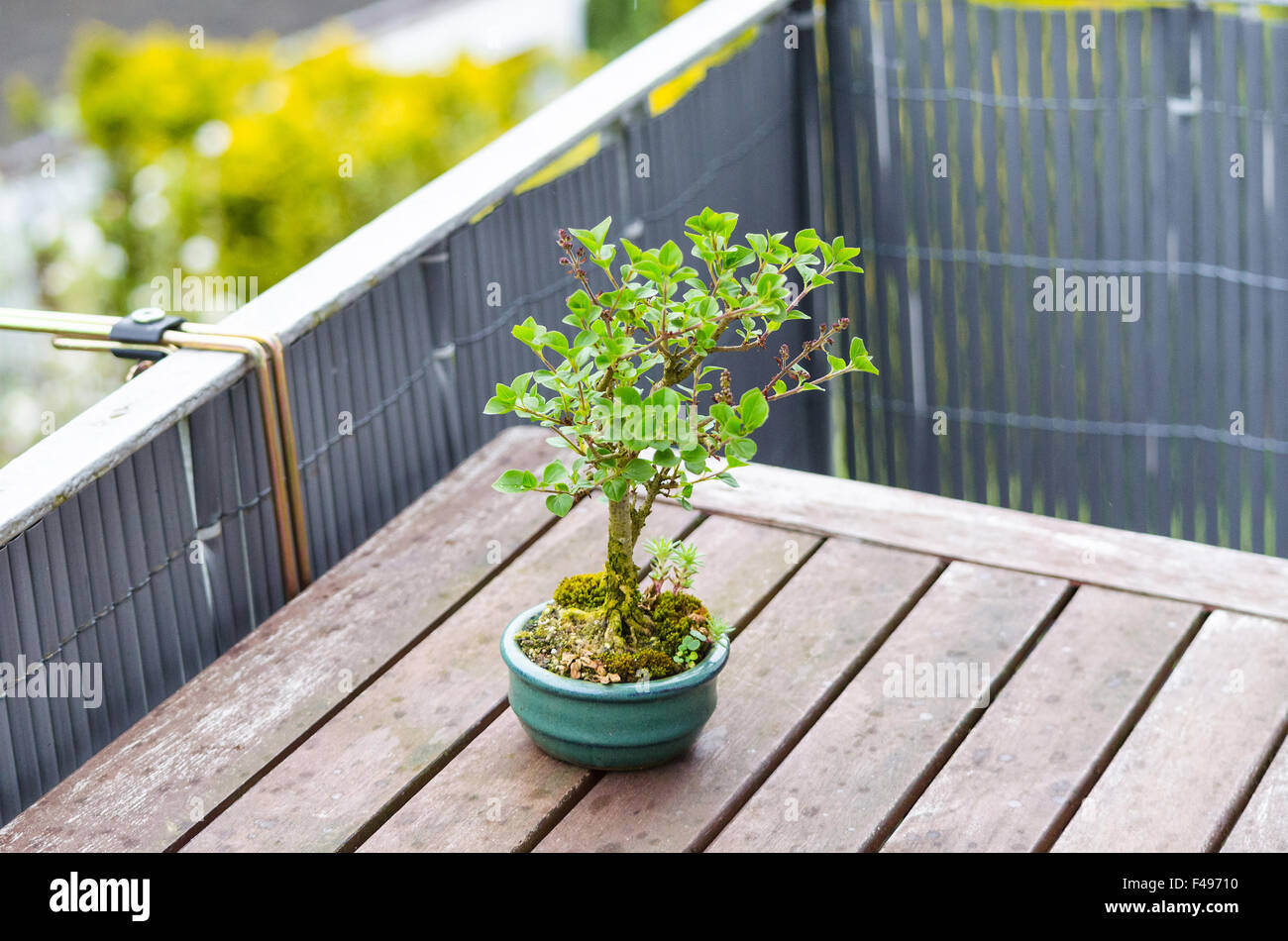 Bonsai Pot Wiring Tree Stock Photos Video Image