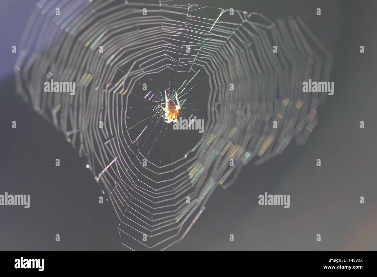 Spider-web - Stock Image