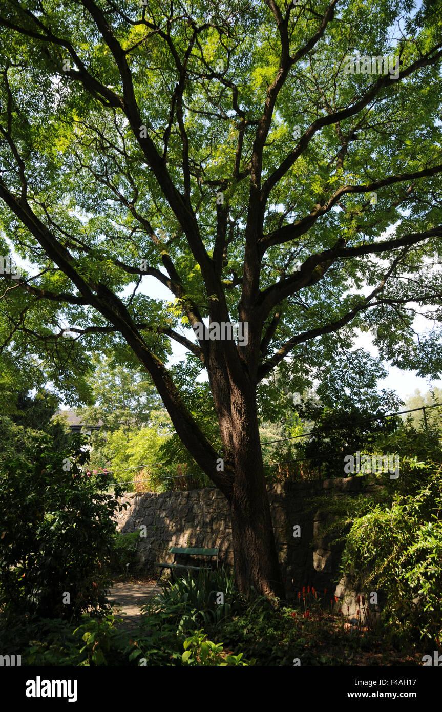 Corktree - Stock Image