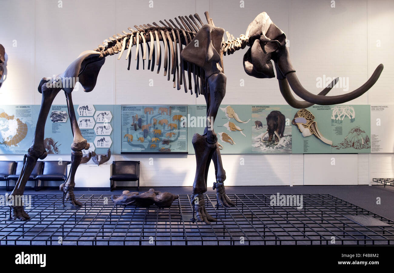 Museum of Prehistory and history in Bottrop. - Stock Image