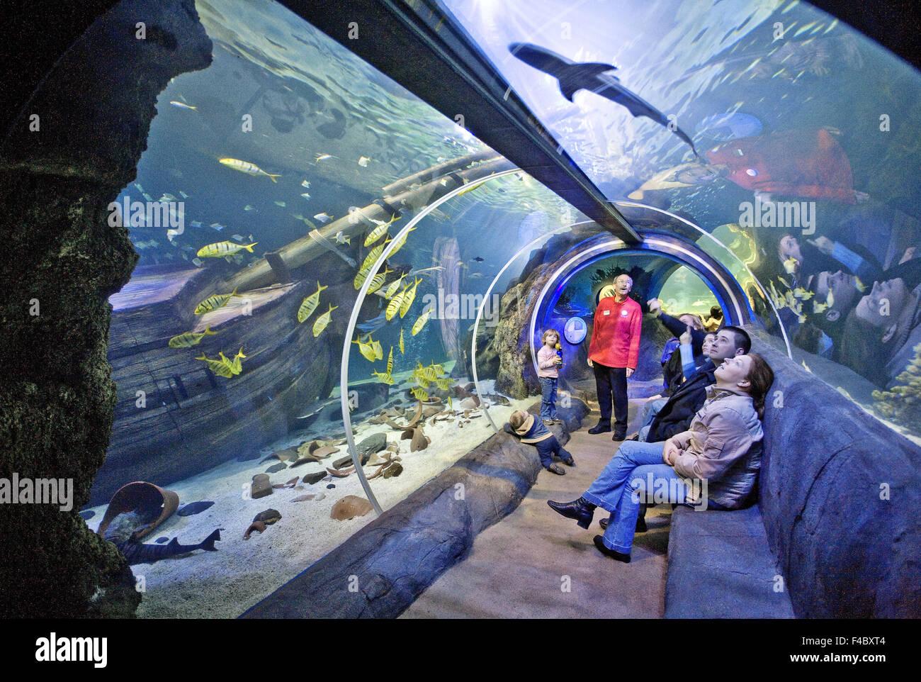 Sea Life Oberhausen, Germany - Stock Image