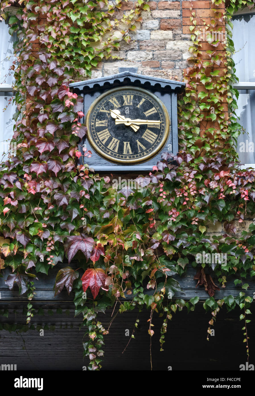 Wells, Somerset, UK. A clock at The Swan Hotel surrounded by Virginia Creeper in autumn - Stock Image