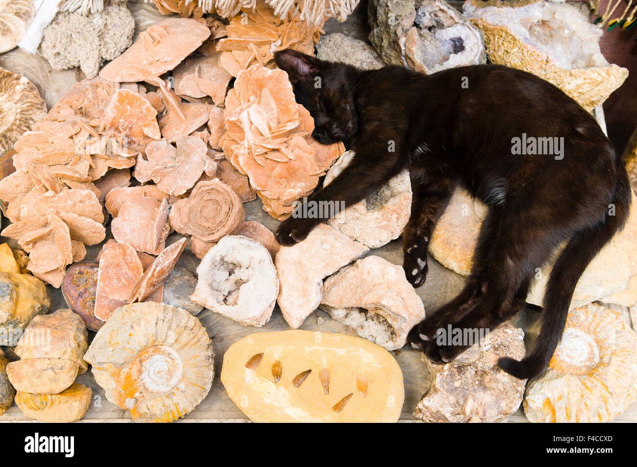 Cat and Fossils for sale in the souk, Medina, Marrakech
