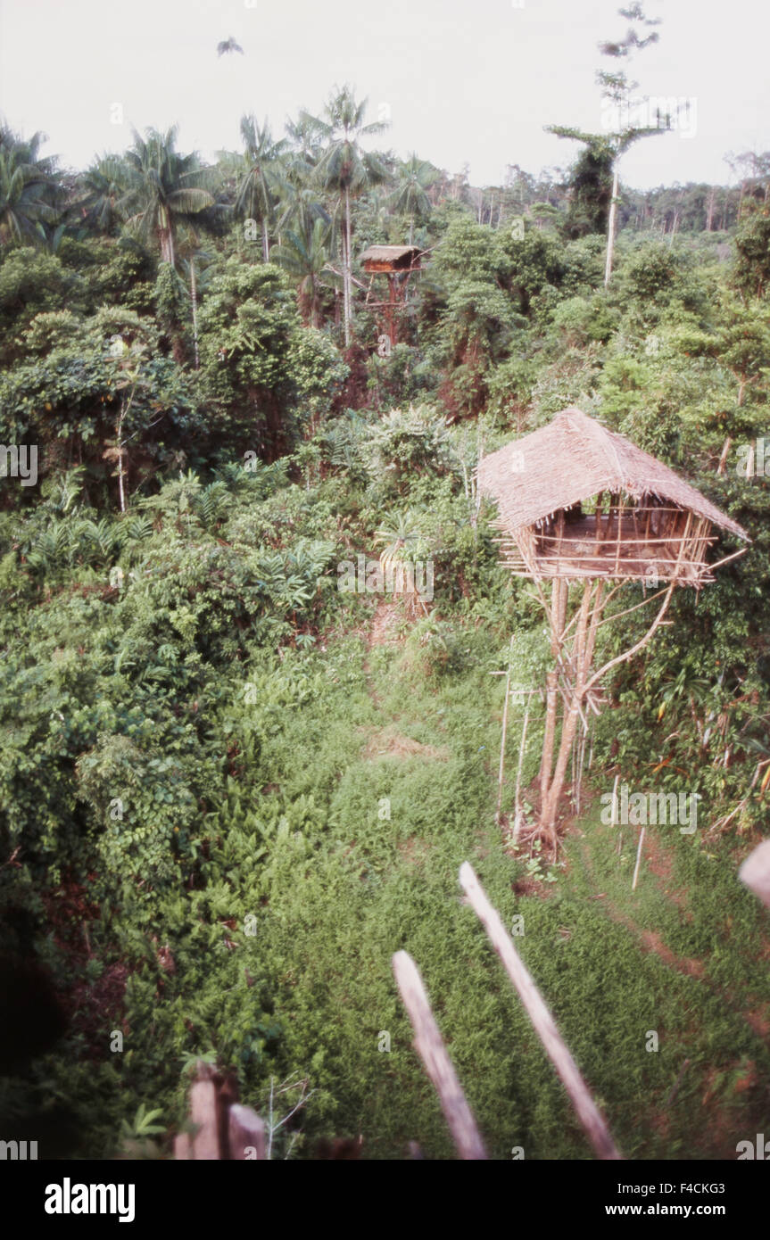 Picture of: Indonesia Irian Jaya Korowai Tree House In Forest Large Format Stock Photo Alamy
