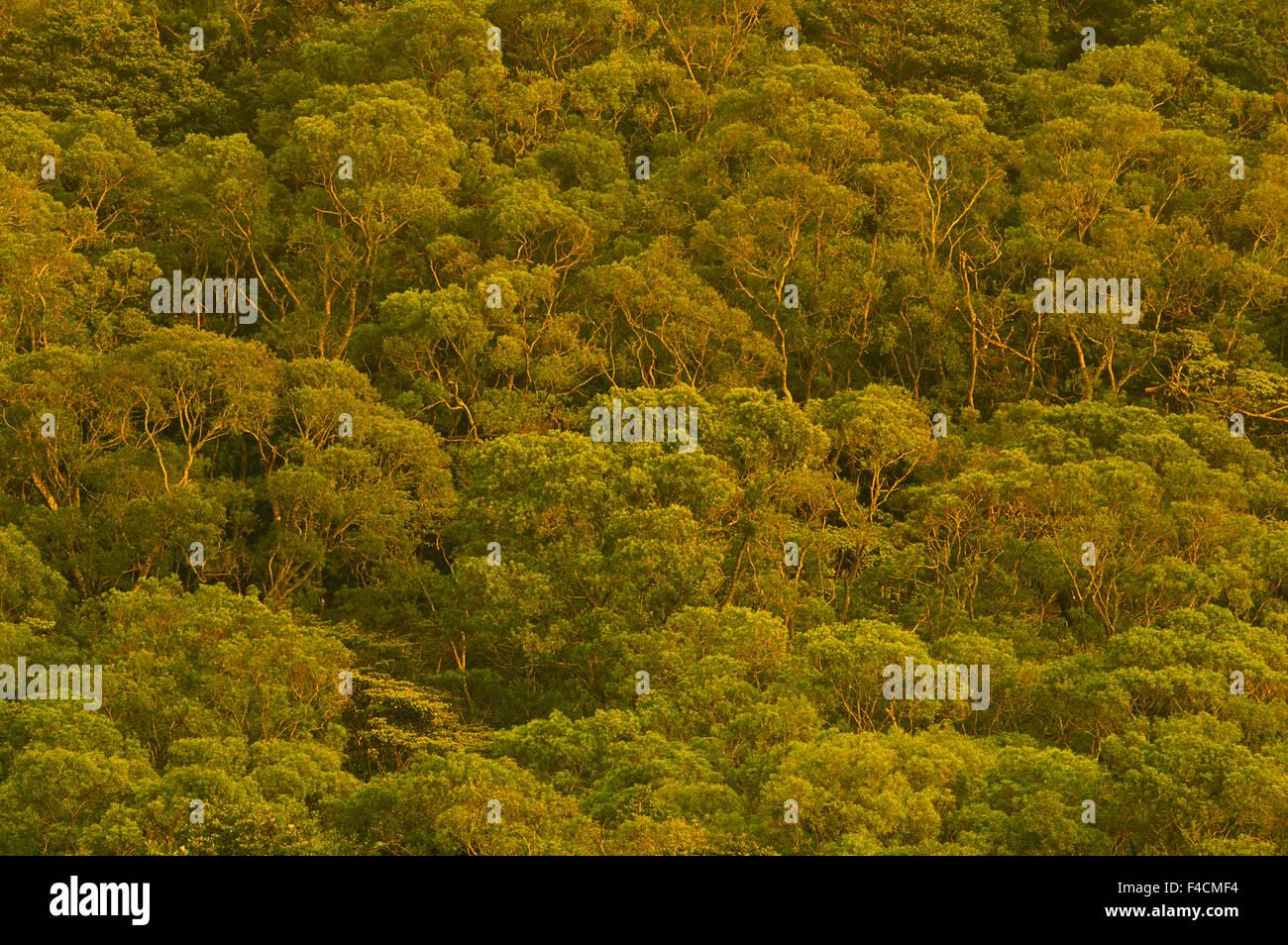 Hong Kong, Po Lin Monastery. Lantau Island. (Large format sizes available) - Stock Image