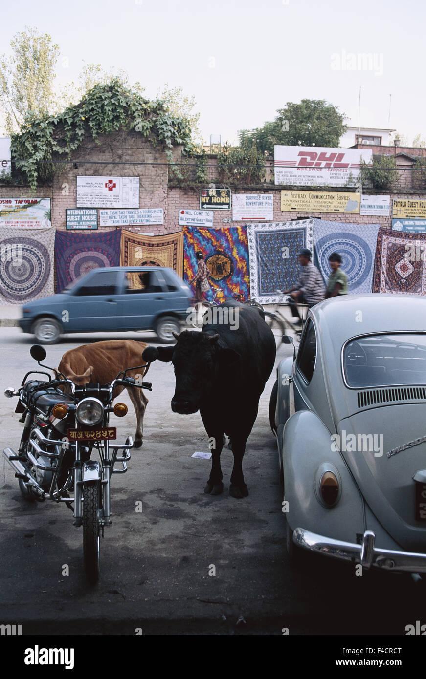 Nepal, Katmandu. street scene. (Large format sizes available) - Stock Image