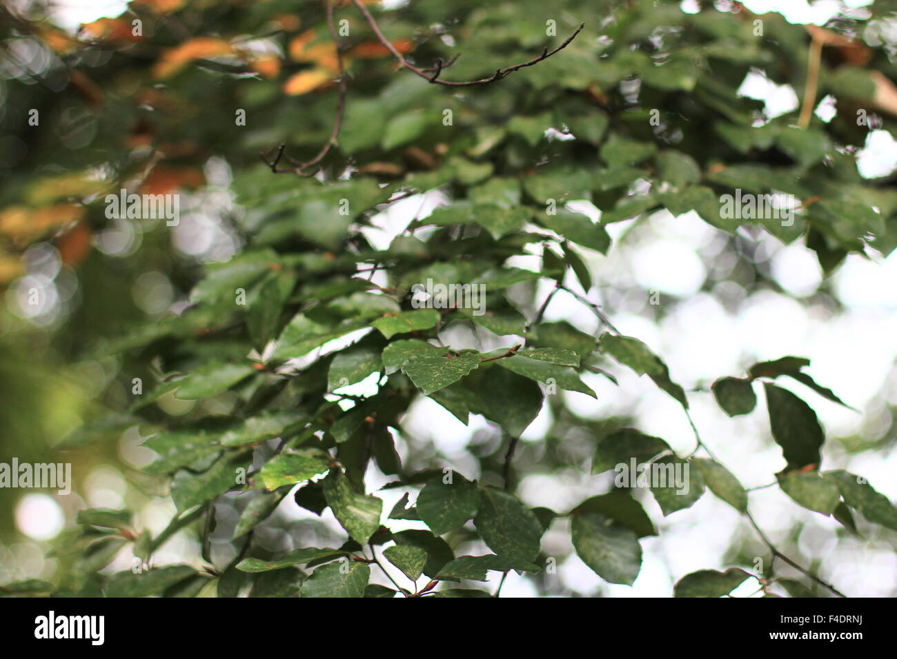 Green leaves at eye level. Stock Photo