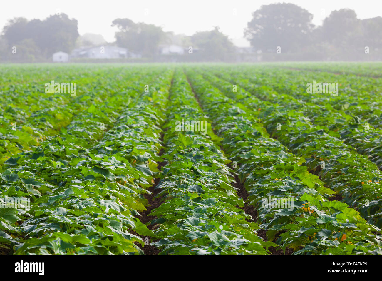 USA, Florida, Homestead, farm and fields. - Stock Image