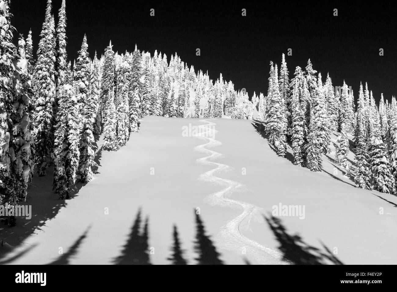 Nice turn tracks off of Lodi on blue sky day at Whitefish, Mountain Resort, Montana, USA. - Stock Image