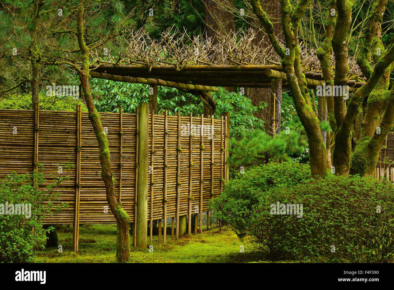Bamboo Fence, Early Spring, Portland Japanese Garden, Portland, Oregon, USA  (PR)