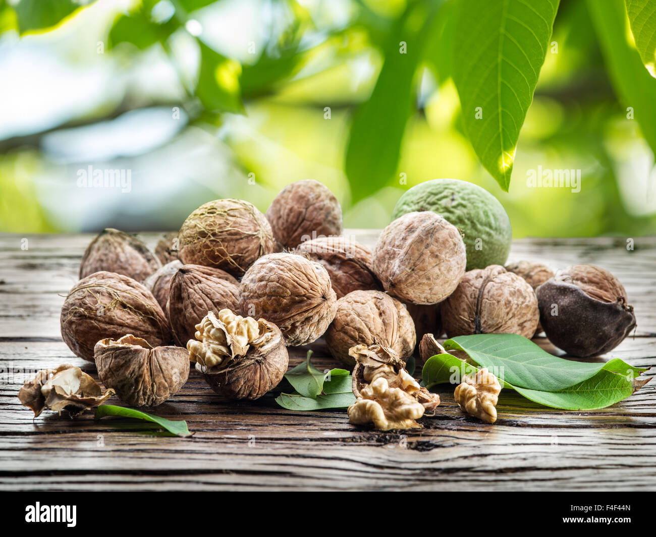 Walnuts on the wooden table under the walnut-tree. - Stock Image