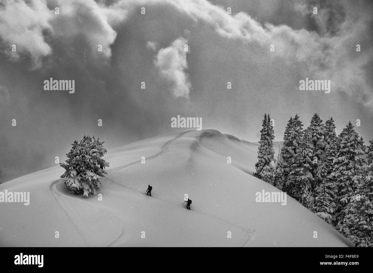 Backcountry Ski Climbers in fresh powder, view near Beartrap-Desolation Ridge, Big Cottonwood Canyon, Uinta Wasatch Stock Photo