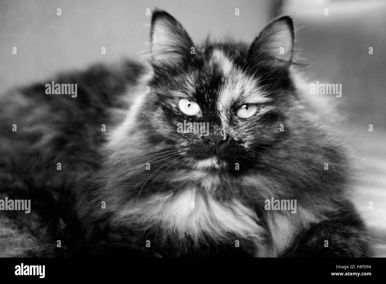 Siberian Black and White Stock Photos & Images - Alamy
