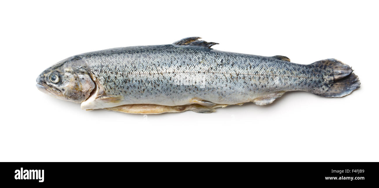 the gutted trout on white background - Stock Image