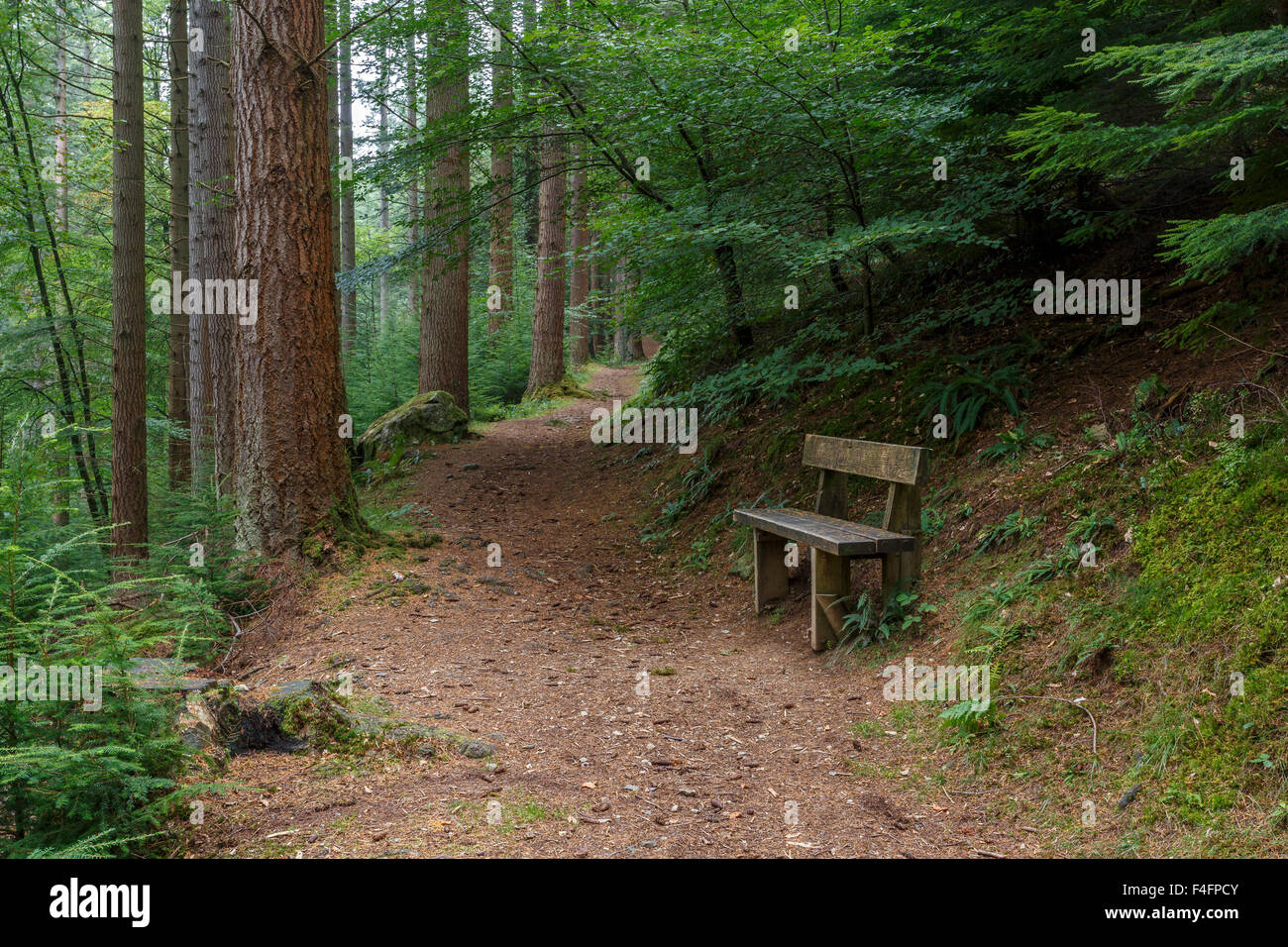 Wooden bench and forest track, Snowdonia National Park, North Wales - Stock Image