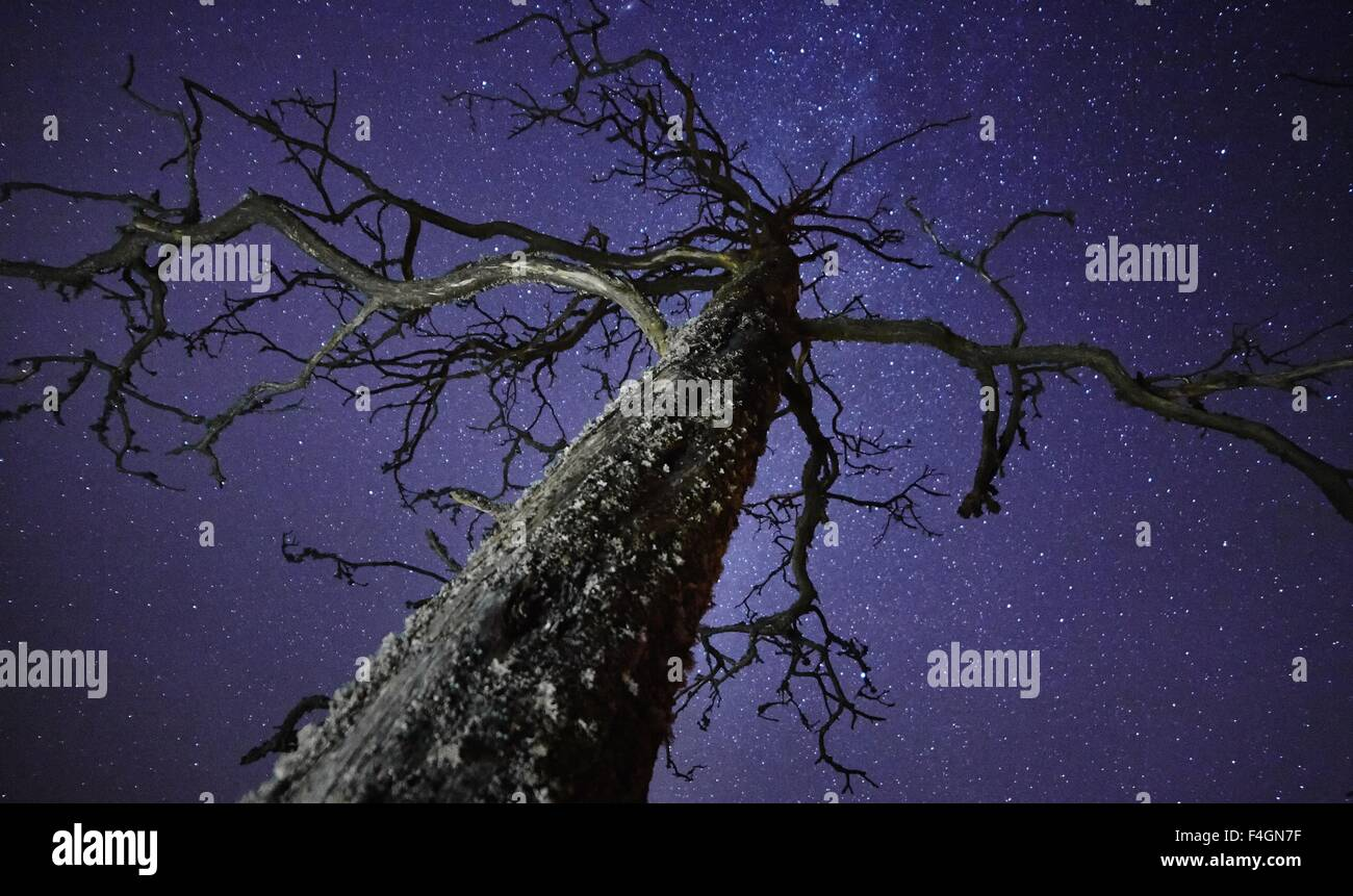 Dead tree with stars on the night sky on the background. The Milky Way is just behind the tree. - Stock Image