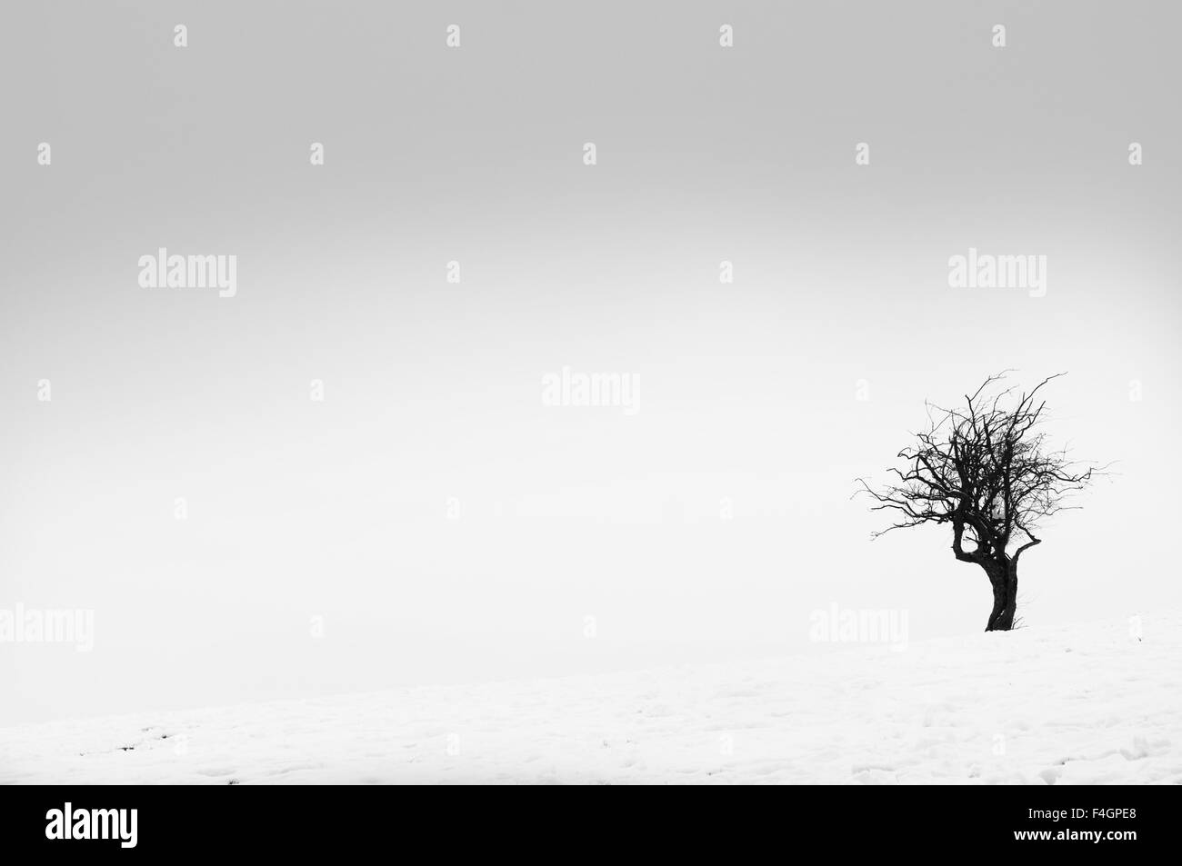 A lonely tree in a stark Winter landscape. - Stock Image