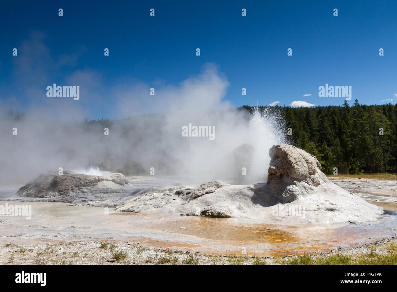 Eruption of Grotto Geyser, Yellowstone National Park, Wyoming, USA - Stock Image
