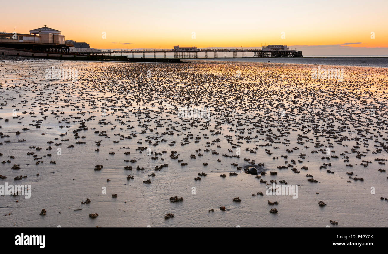 Sandworms. A deserted beach before sunrise covered in coiled sandworm castings at low tide in Worthing, West Sussex, - Stock Image