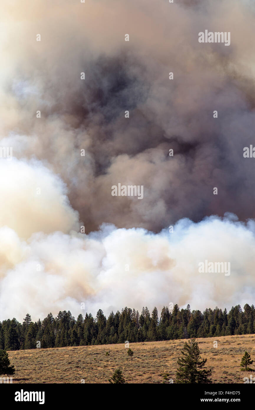 US Forest Service; controlled fire burn near Mt. Shavano; Chaffee County; central Colorado; USA - Stock Image