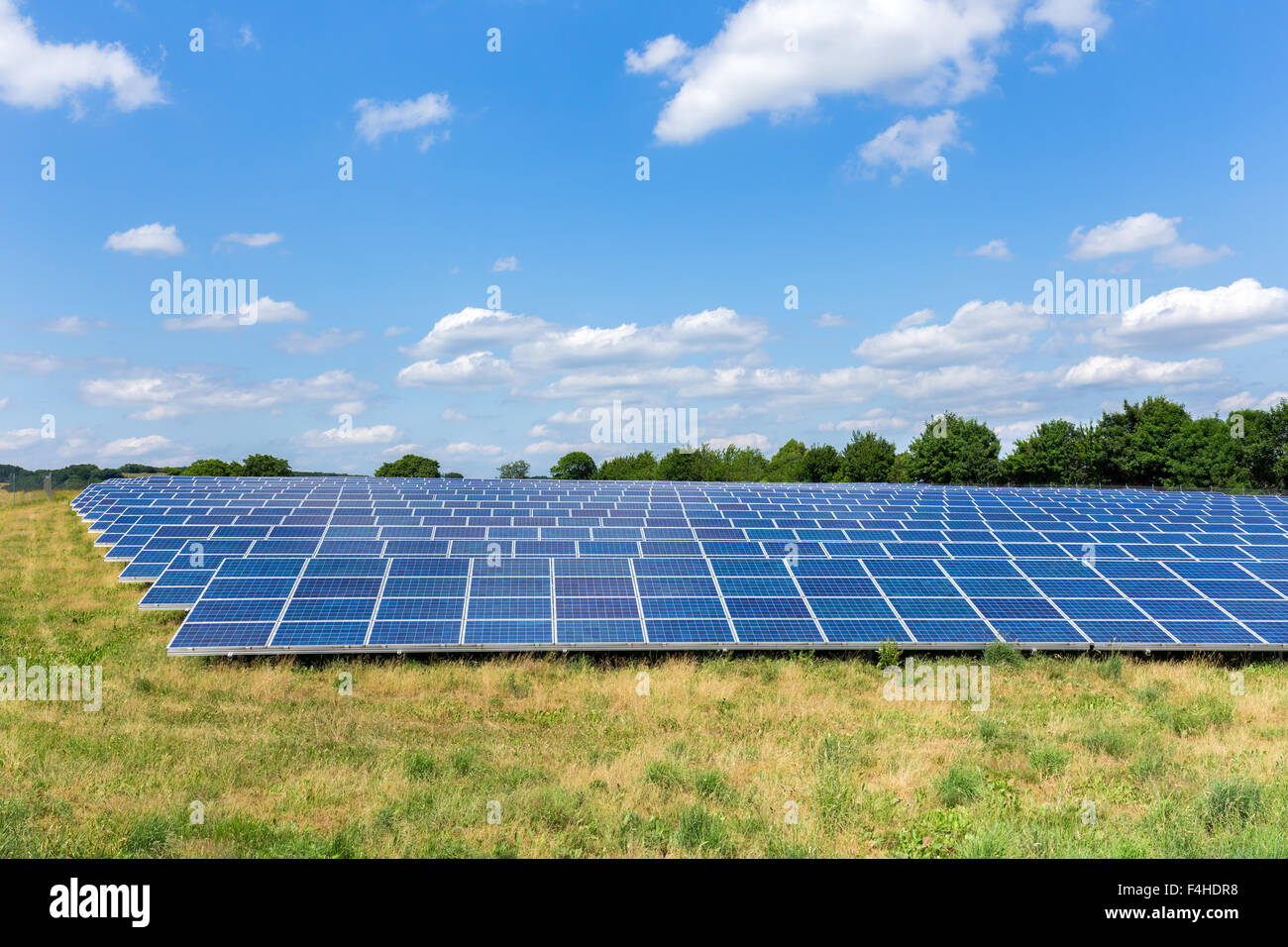 Field with lots of solar panels in the Netherlands - Stock Image