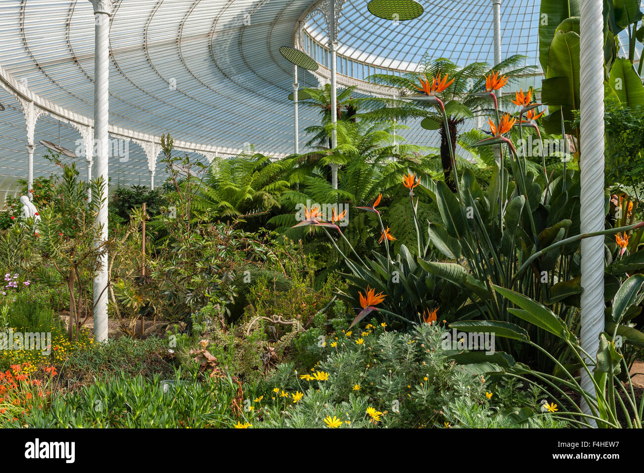The wrought iron roof and cast iron columns of the Kibble Palace at the Glasgow Botanic Garden, Scotland, UK - Stock Image