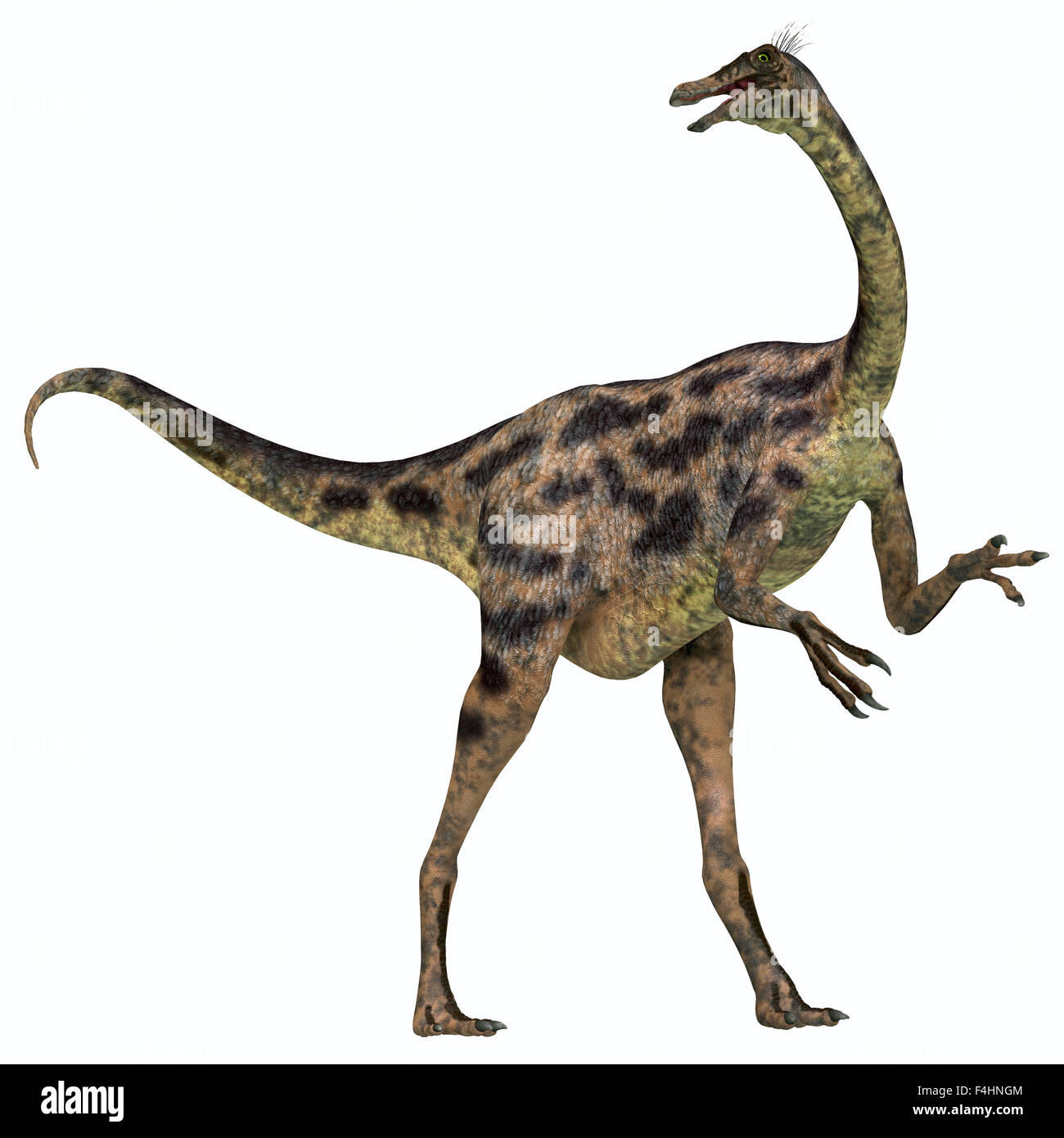 Gallimimus was an omnivorous dinosaur that lived in Mongolia during the Cretaceous Period. - Stock Image