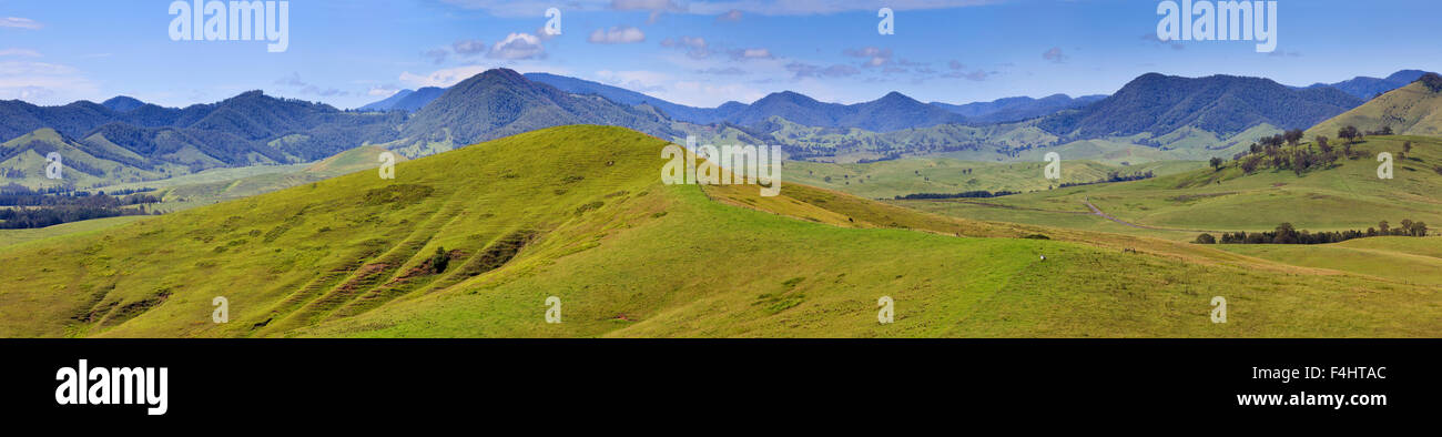 green agriculture pasture of Australia near Cobark in Barrington Tops, NSW, on a sunny summer day - Stock Image