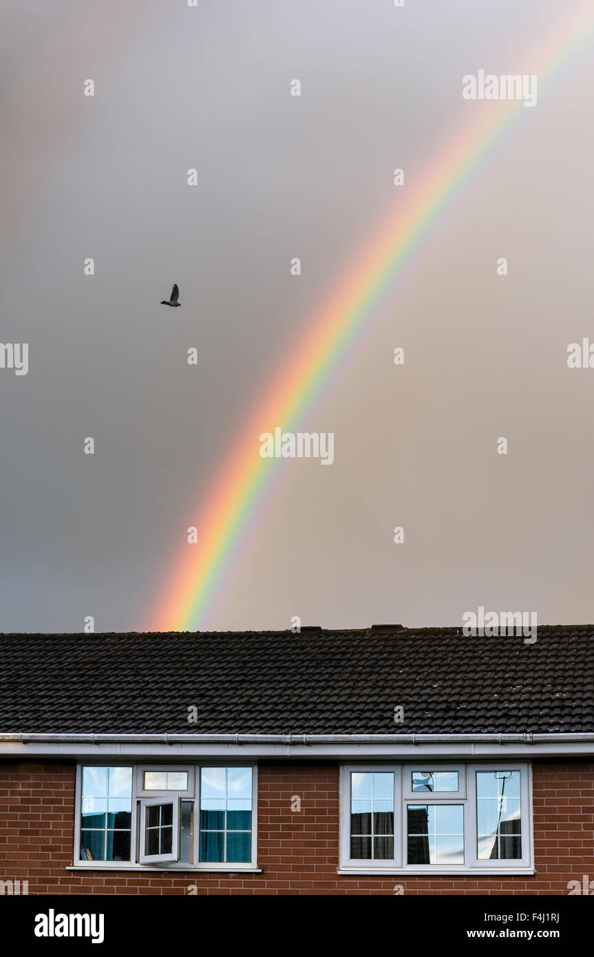Rainbow in grey cloudy sky, with bird flying and house roof in foreground. - Stock Image