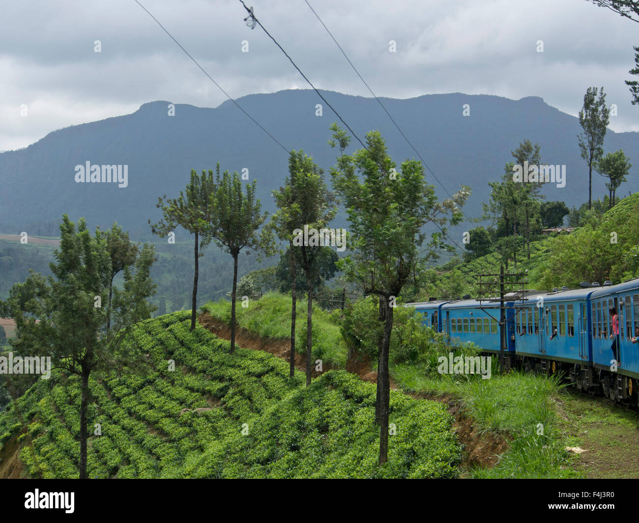 Tea plantations on train journey from Kandy to Ella, in the highlands of Sri Lanka, Asia - Stock Image