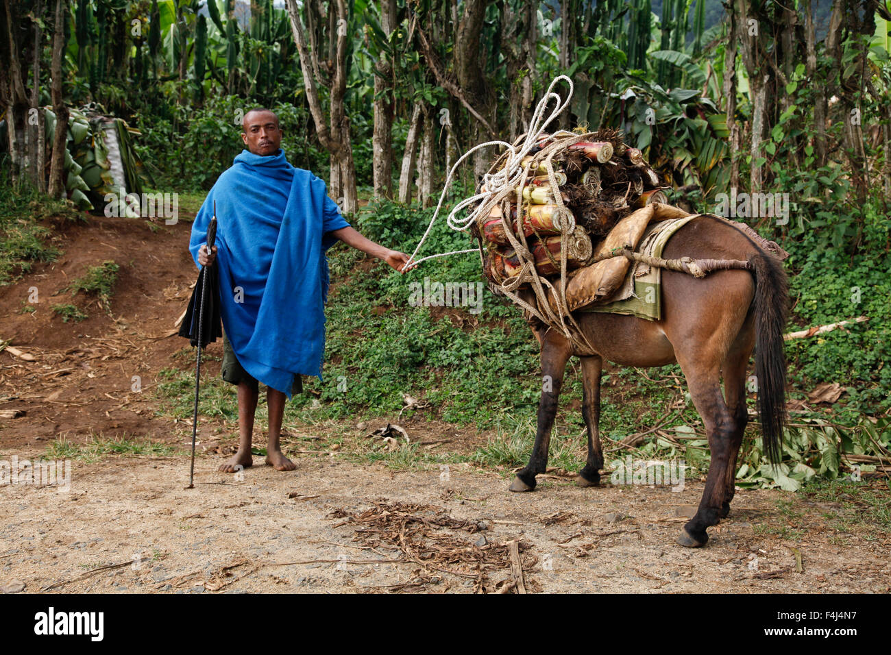 Farmer in the Meket mountains, near the Rift Valley, in Ethiopia, Africa - Stock Image