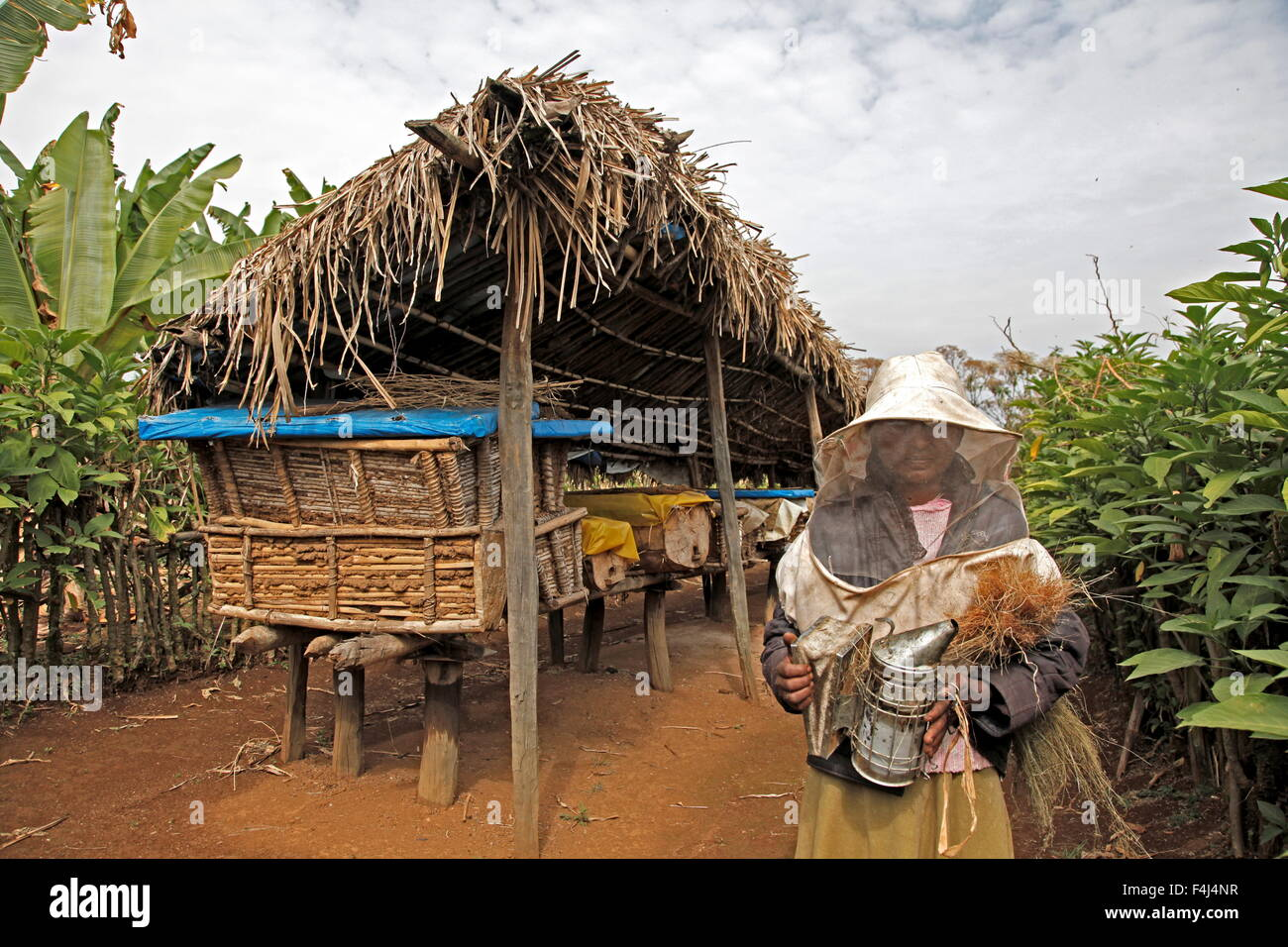 Farmer working in a honey producing co-operative in the Masha area of Ethiopia, Africa - Stock Image