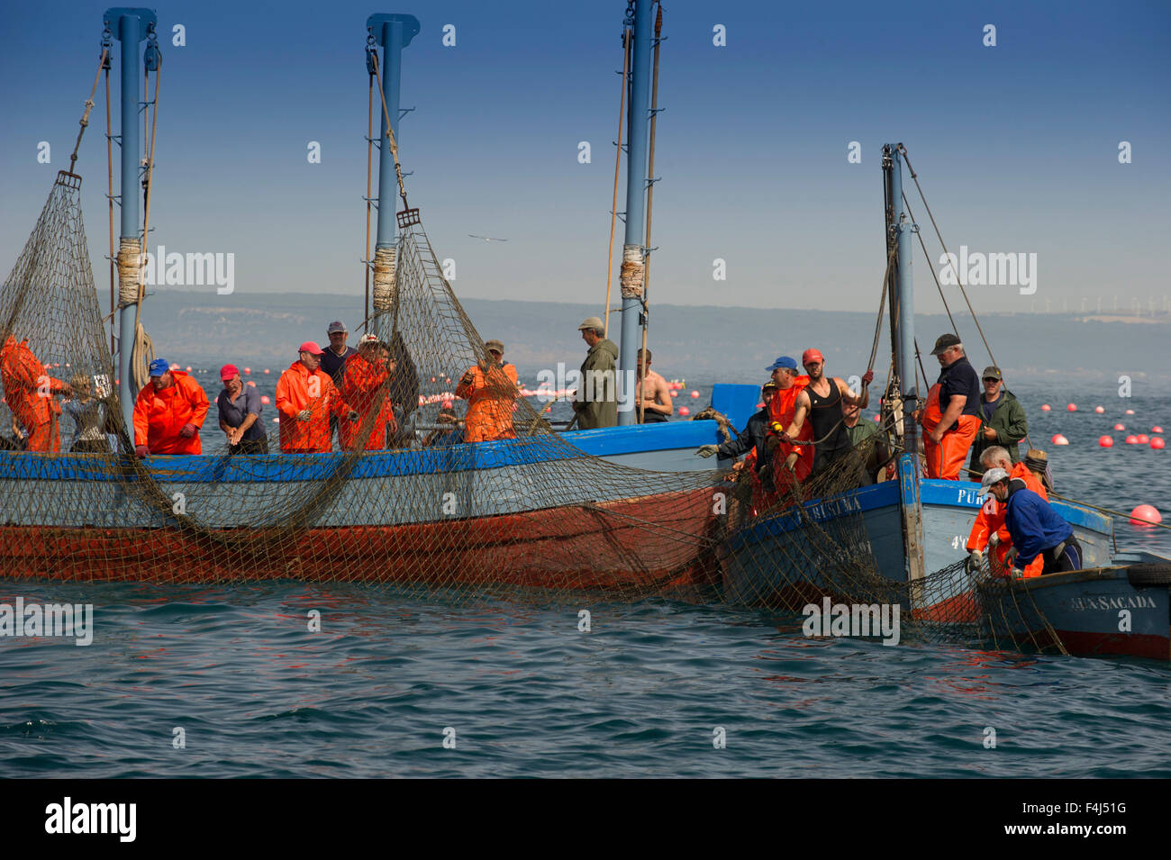 Almadraba Atlantic bluefin tuna fishery consists of a maze of nets, the final net is winched to the surface, Andalucia, - Stock Image