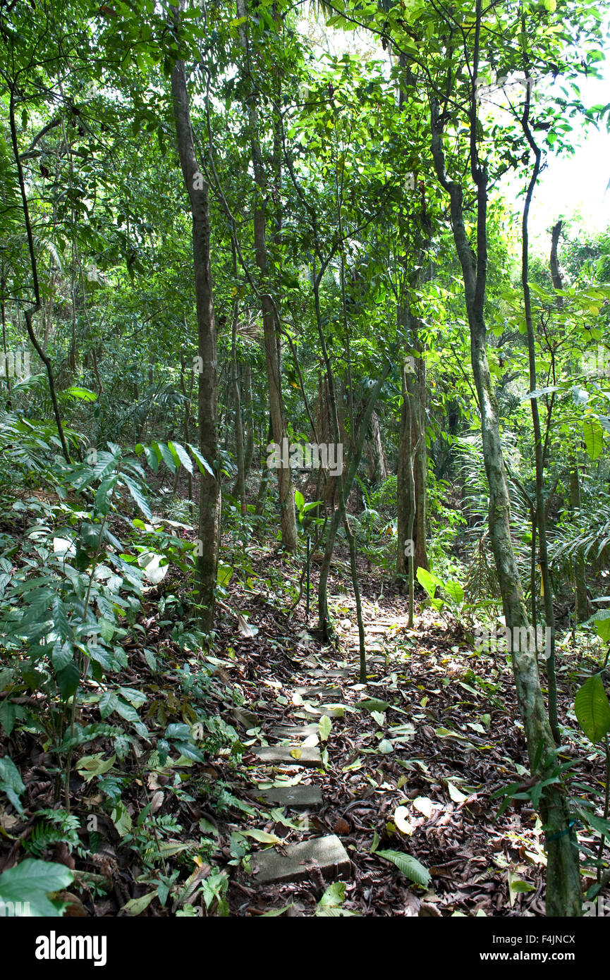 Rainforest Barro Colorado Island Panama - Stock Image