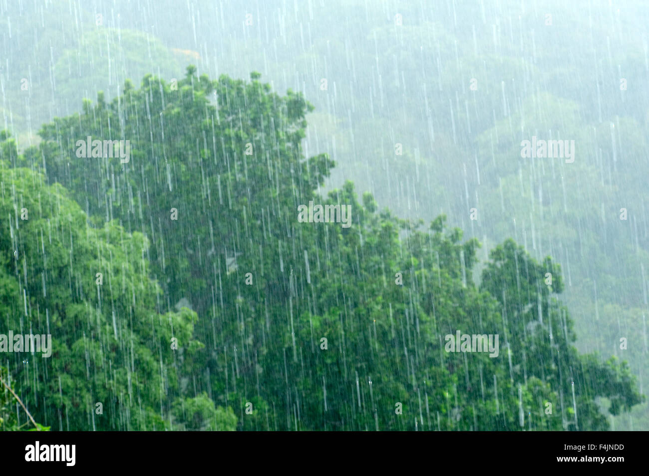 Heavy Rainfall jungle Panama - Stock Image