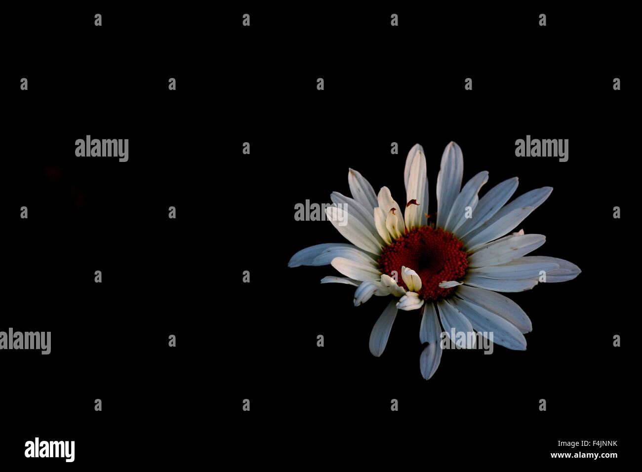 Flower sitting in darkness - Stock Image