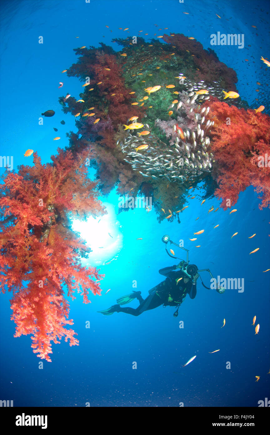 Diver on sunken shipping buoy - Stock Image