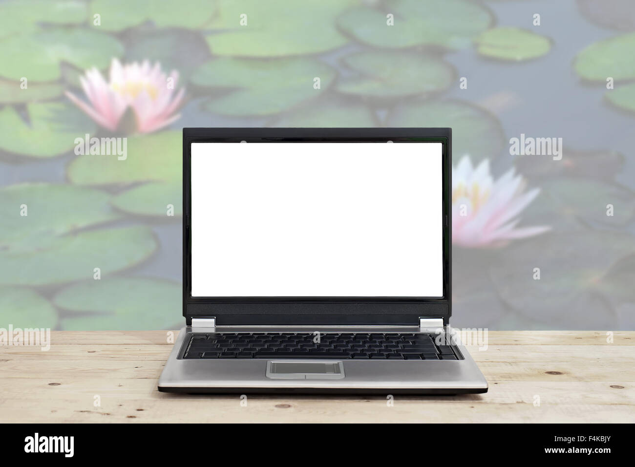 Lotus Flower Information Stock Photos Lotus Flower Information